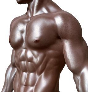 bodybuilder-331670_1280